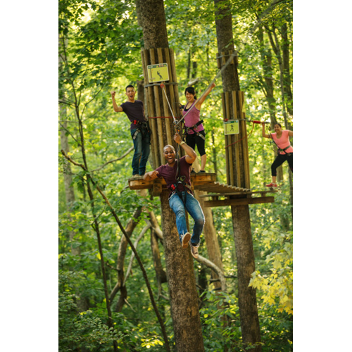10% OFF Go Ape Treetop Adventures